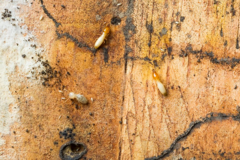 Eagle Eye Termite and Pest Control - Termite Inspection 2